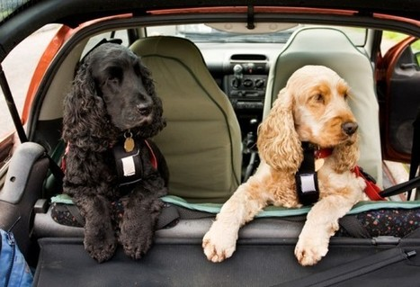 90 Road Travel Tips Continued: Pet Travel   Dog Care Guide   Scoop.it
