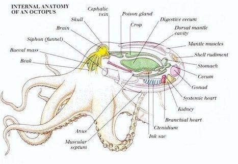 Wing Chun – Taoisme – Hypnose et autres états du cerveau | Wing ... | Religion - ésotérisme - Bio | Scoop.it