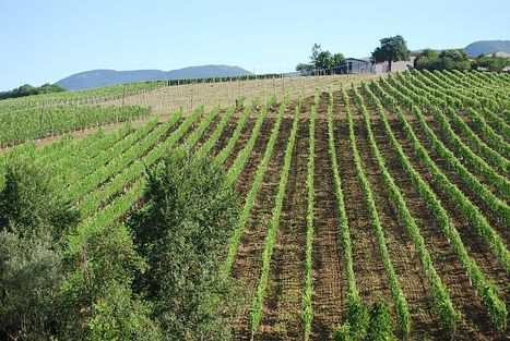 Italian Wine and Food of Le Marche Regione | Marche House | Scoop.it