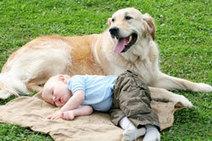 Infezioni respiratorie nei bambini ed effetto protettivo di cani e gatti | The Matteo Rossini Post | Scoop.it