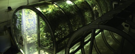 Scientists Have Already Built a Prototype Greenhouse for Mars | CALS in the News | Scoop.it