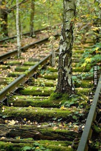 Tree growing on abandoned tracks | Modern Ruins, Decay and Urban Exploration | Scoop.it
