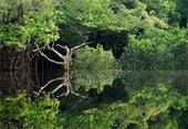 Ações para compatibilizar desenvolvimento econômico com sustentabilidade ambiental | Agência FAPESP :: Especiais | Desenvolvimento Sustentavel | Scoop.it