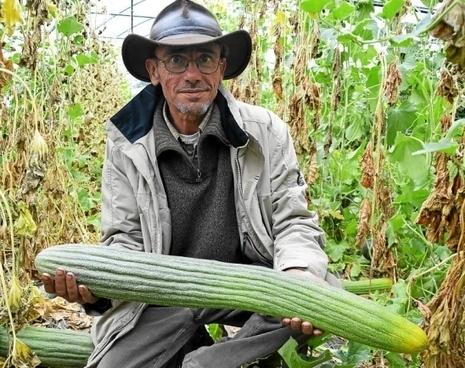 Conservatoire du goût. Collini, paysan militant | Questions de développement ... | Scoop.it