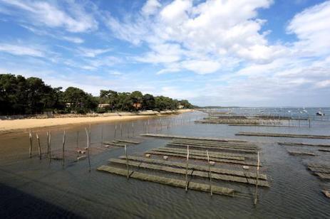 Bassin d'Arcachon : alerte aux moules toxiques du Banc d'Arguin | Biodiversité | Scoop.it