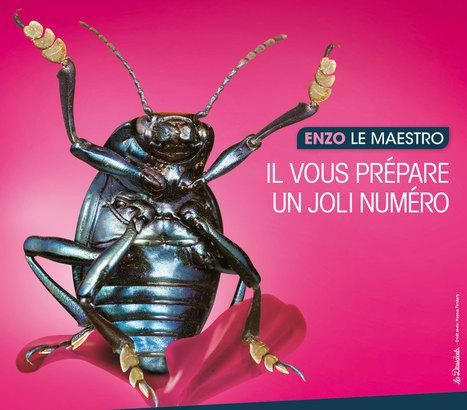 A Micropolis, le carnaval des insectes vous prépare un festival de surprises ! | Revue de Web par ClC | Scoop.it