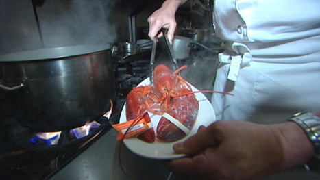 Lobster and crab can probably feel pain, says study - Nova Scotia - CBC News | Science News2 | Scoop.it