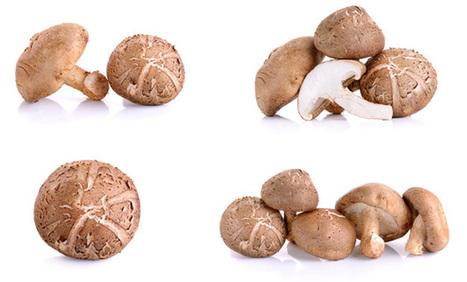 Micoterapia - I funghi curativi: SHIITAKE | Medicina Naturale | Scoop.it