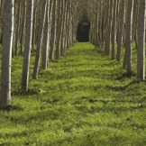 GMO Trees - Eradicating Real Forests to plant Monoculture BioEngineered Trees | Biodiversity IS Life  – #Conservation #Ecosystems #Wildlife #Rivers #Forests #Environment | Scoop.it
