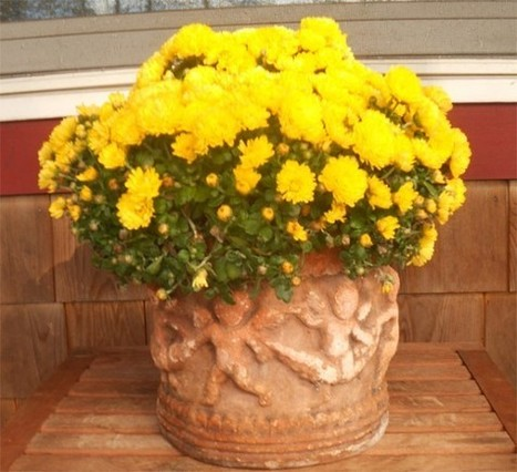 Gardening: Decorating with Fall Flowers and Plants | Tips to Display ... | gardening ideas | Scoop.it