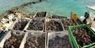 Vin : L'heure des vendanges à… Tahiti   Autour du vin   Scoop.it