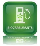 Impact économique des biocarburants | Intellige... | Competitive & Market Intelligence | Scoop.it