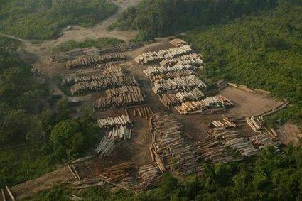 Peru exports endangered wood despite US trade pact | Environmental news from Peru | Scoop.it