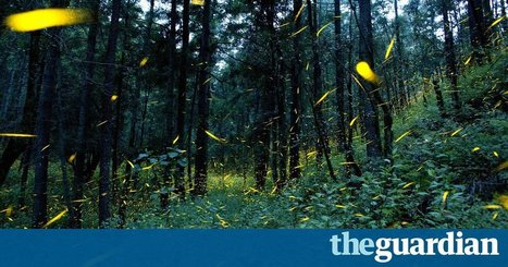 "Mexican village uses fireflies to halt deforestation by logging industry (""tourism income is better"") 