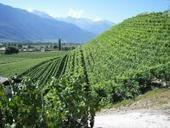 First aid for winemakers | MicrobiologyBytes | Scoop.it