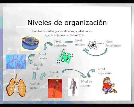 Niveles de organización en el cuerpo humano (célula, tejido, órgano, sistema.) Definición y ejemplos: Niveles de organización en el cuerpo humano (célula, tejido, órgano, sistema.) Definición y eje...   BIGEO PARA LA ESO   Scoop.it
