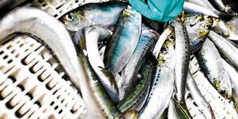 Maroc : La pêche côtière a bonne mine @Investorseurope#Mauritius stock brokers | Investors Europe Mauritius | Scoop.it