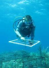 Large study shows pollution impact on coral reefs -- and offers solution | Nature : beauty, beasts and curiosities... | Scoop.it