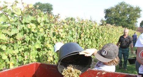 La flamme de l'Armagnac s'allume | Le Vin et + encore | Scoop.it