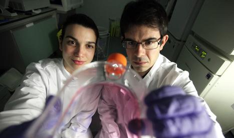 Mitochondria shown to trigger cell ageing - Press Office - Newcastle University | Chair et Métal - L'Humanité augmentée | Scoop.it