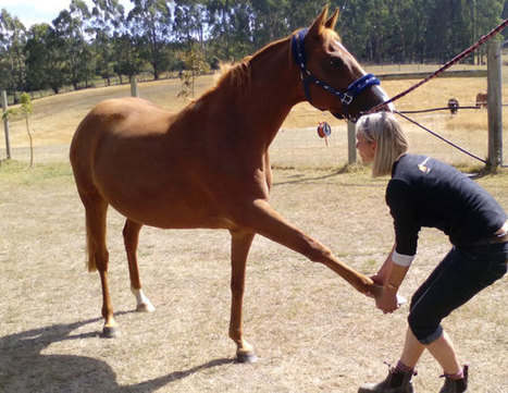 Equine massage: Hands on for the competitive edge - Horsetalk | Equine massage | Scoop.it