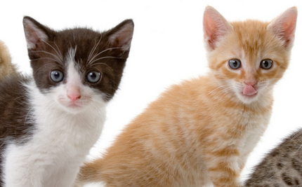 Driver Sees Double: Highway Kitten Rescue   Your Passions   Scoop.it