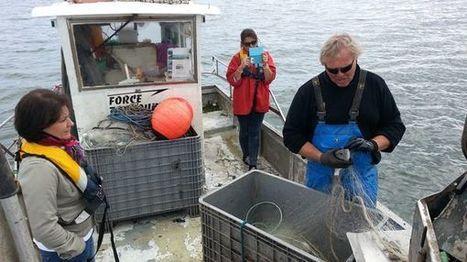 Dans la peau d'un marin-pêcheur le temps d'une marée sur le Bassin d'Arcachon | Le Bassin d'Arcachon | Scoop.it