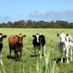 Pourquoi la consommation de viande a baissé aux Etats-Unis ? | Développement durable et efficacité énergétique | Scoop.it