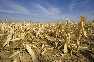 Dried up: Poverty in America's drought lands | Sustain Our Earth | Scoop.it