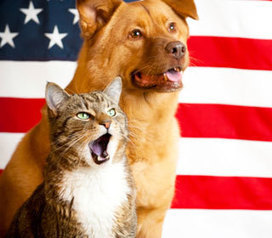 Don't Make These 7 Fourth of July Pet Mistakes   Rodale News   After Retirement   Scoop.it