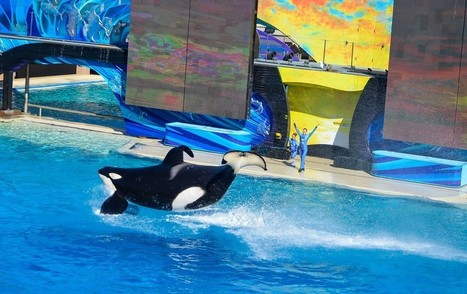 It's Official. The Internet Hates SeaWorld. | Nature Animals humankind | Scoop.it