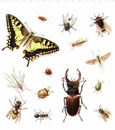 Ecobase 21 - L'Encyclopédie du Développement Durable : Insectes | Technologie Robotique et développement durable 3403 | Scoop.it