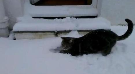 Ce chat découvre la neige pour la première fois... | Les chats c'est pas que des connards | Scoop.it