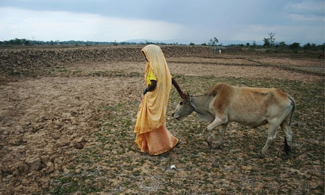 We cannot give a woman a cow and expect her to change the world | Geography in the classroom | Scoop.it