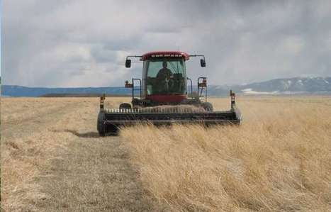 Grassland harvest could conserve resources, benefit farmers, and curb government spending | GarryRogers Biosphere News | Scoop.it