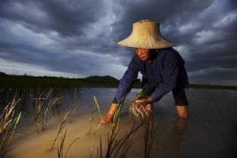 Agriculture : changer de modèle pour nourrir tout le monde | Questions de développement ... | Scoop.it