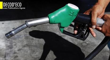 N'ayez plus de scrupules à investir dans les biocarburants - Atlantico.fr | Miscanthus | Scoop.it