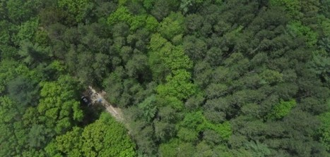 Drone Startup aims to plant One Billion Trees a Year | Trees and Woodlands | Scoop.it