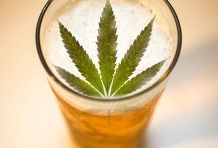 Did You Know That Beer and Cannabis (Maybe) Belong To The Same Family? | Store My Cannabis | Scoop.it