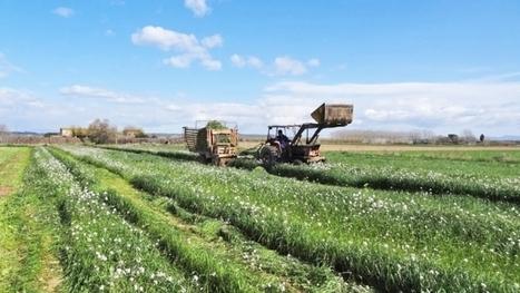 Raigrás, colza forrajera y avena como cultivos captadores de nitratos y para biogás | Cultivos | Scoop.it