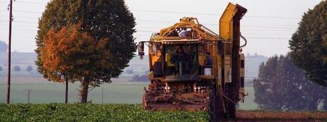 L'élevage et les biocarburants devanceront les productions végétales | Infogreen | Sustain Our Earth | Scoop.it