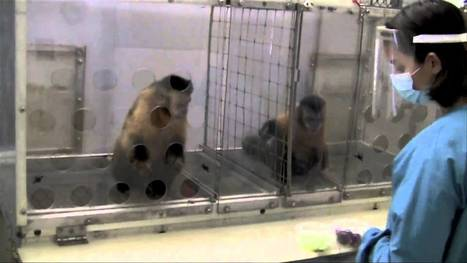 Two Monkeys Were Paid Unequally: Excerpt from Frans de Waal's TED Talk   Diversity & Inclusion   Scoop.it