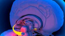 علوم - BBC Arabic - اكتشاف البروتين الذي قد يكون مسؤولا عن فقدان الذاكرة | العلوم | Scoop.it