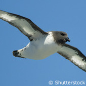 Moon cycles and petrels... migration and mating | Ecosystems: Constantly Changing | Scoop.it