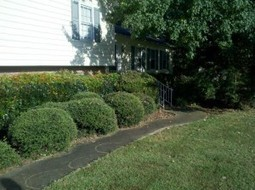 K&N Lawn Maintenance is the reliable lawn maintenance company for you yard | K&N Lawn Maintenance | Scoop.it