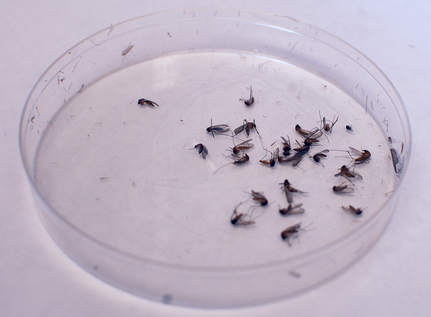 West Nile Infections High, But Peak Season Not Over Yet - 88.9 KETR | RX News | Articles for Bach RX Twitter Feed | Scoop.it