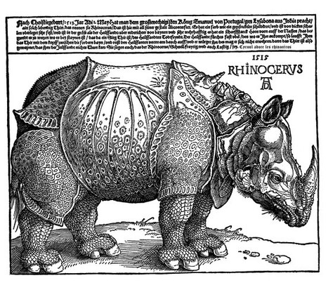 La théorie du rhinocéros – Stratégies digitales pour les noobs | A la recherche de la valeur ajoutée | Scoop.it