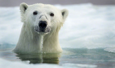 Petition: Let's tell the US government to say NO to Shell's arctic oil project | Take action for a safer climate | Scoop.it