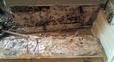 The differences between wet rot and dry rot | Timberwise | Property Care | Scoop.it