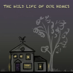 The Wild Life of Our Homes | #SciFund | Scoop.it
